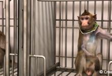 Photo of Whistleblowers at German animal testing lab claim data was faked